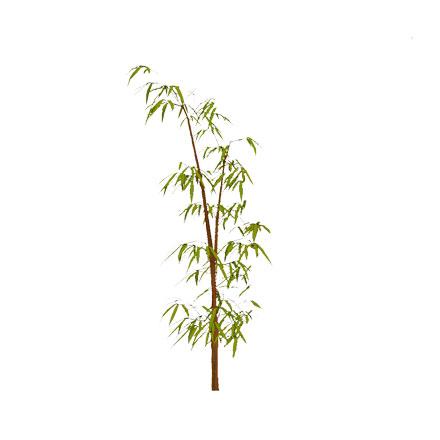 Bambou détouré