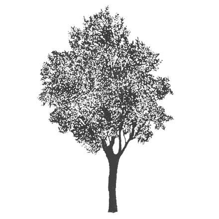 Arbre stylisé noir et blanc