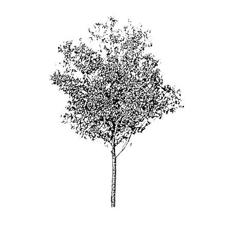 Arbre gravure noir et blanc