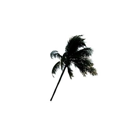 Palmier penché