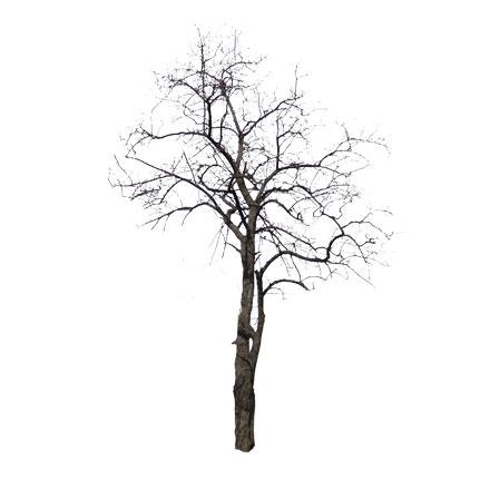 Arbre mort en hiver