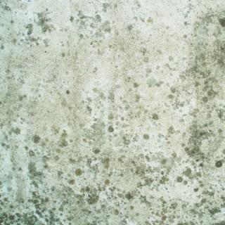 Béton et lichen