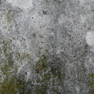 Béton avec mousse et lichen