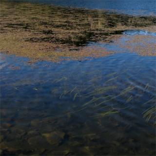 Lac et plantes aquatiques