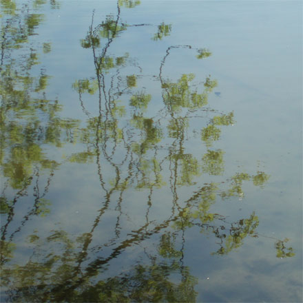 Reflet d'arbre sur l'eau