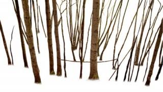 Troncs d'arbres détourés
