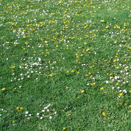 Herbe fleurie