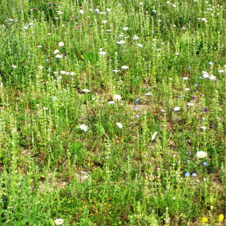 Friche avec herbes et fleurs sauvages