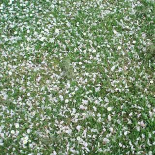 Pelouse au printemps