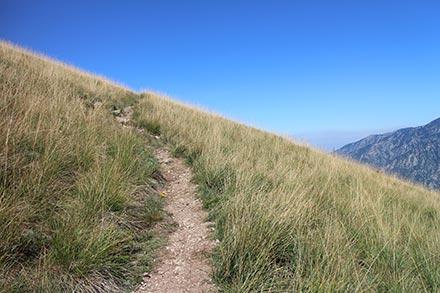 Herbe sèche et graminées de montagne