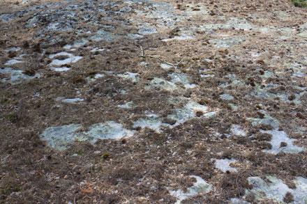 Aiguilles et brindilles sur un rocher