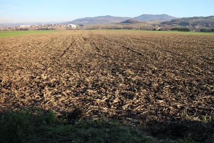 Champ agricole de terre et paille en hiver
