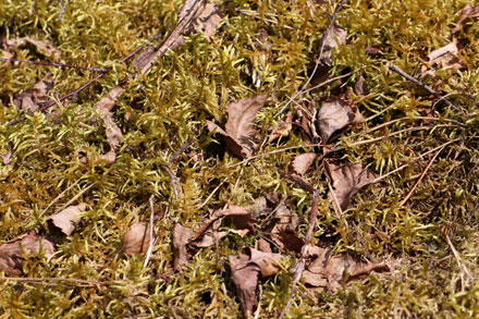 Mousse et feuilles mortes