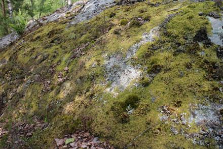 Tapis de mousse sur un rocher