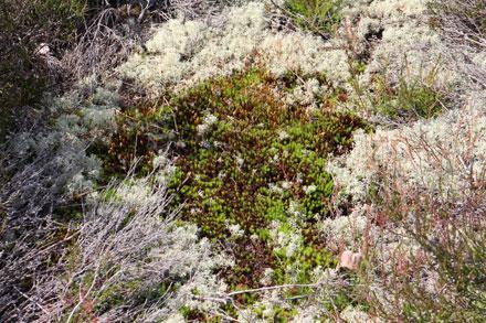 Tapis de mousse et de lichen